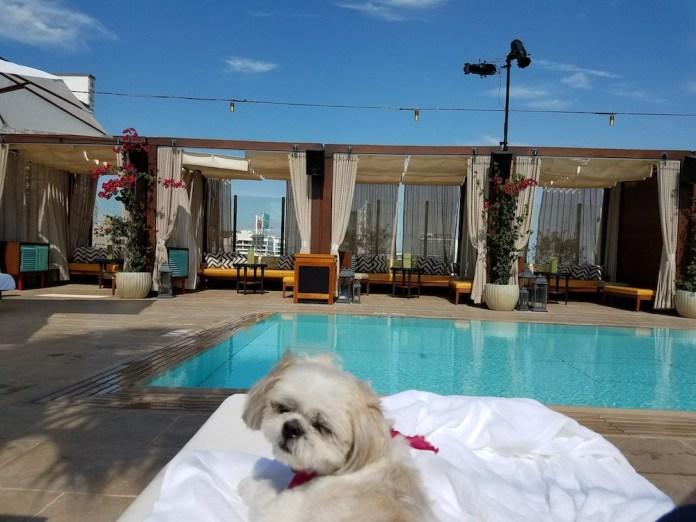 Hôtel de rêve pour animaux de compagnie à West Hollywood