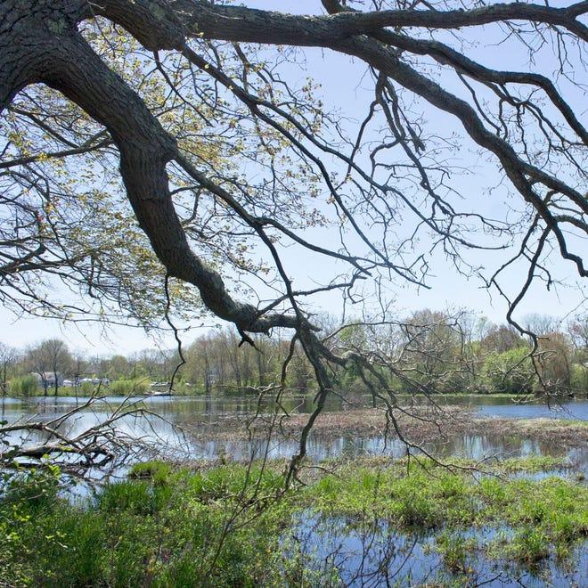 Mill Pond à Acushnet abrite The Sawmill, une réserve créée par la Buzzards Bay Coalition.
