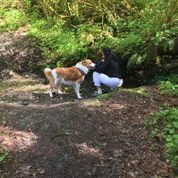 Sentiers de ravin japonais et parc pour chiens