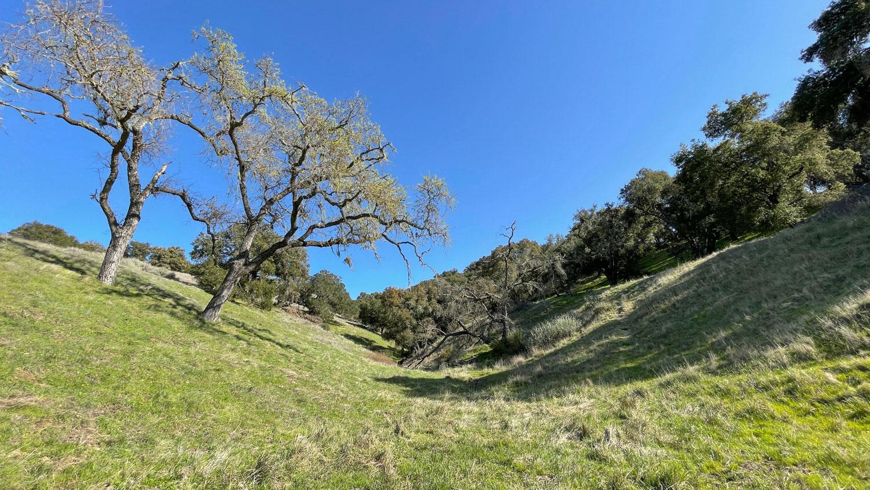 Une colline verdoyante dans la zone des sentiers récréatifs de Live Oak dans la vallée de Santa Ynez.