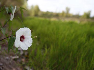Une fleur au Trinity River Audubon Center