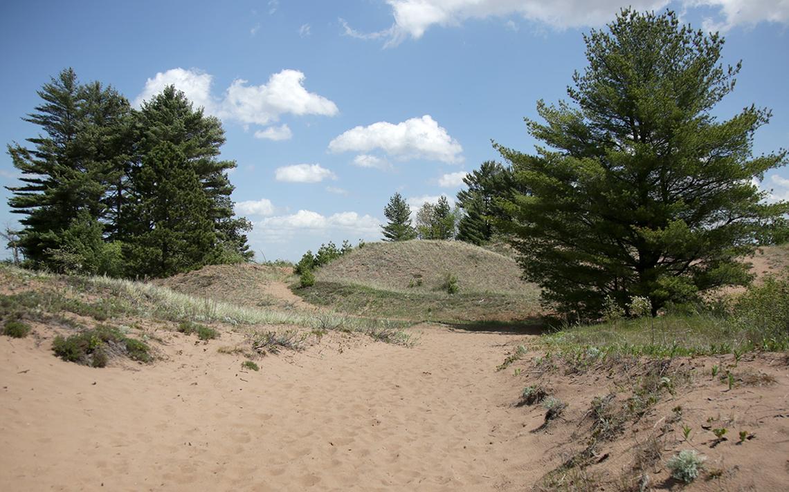 Après avoir émergé d'une section de sentier ombragée par de grands pins, le sentier Park Point devient une zone ouverte de dunes de sable avant de conduire à nouveau les randonneurs dans la forêt de pins.  (Samantha Erkkila/serkkila@duluthnews.com)