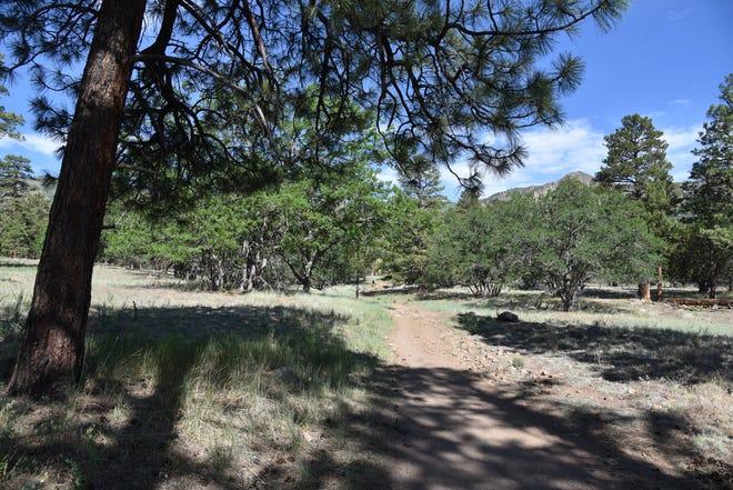 Le sentier Sandy Seep sous les pentes est du mont Elden à Flagstaff.