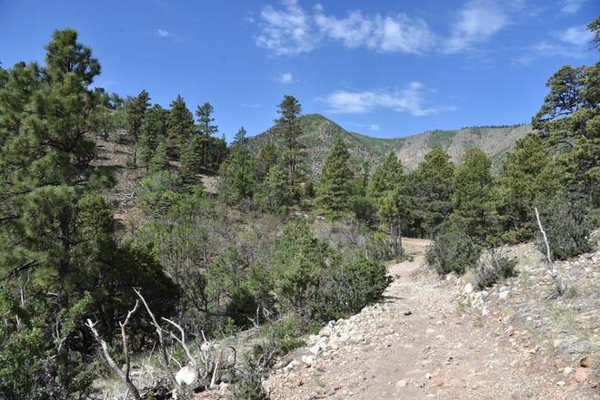 Un endroit pittoresque sur le sentier Little Elden/Arizona dans la forêt nationale de Coconino à Flagstaff.
