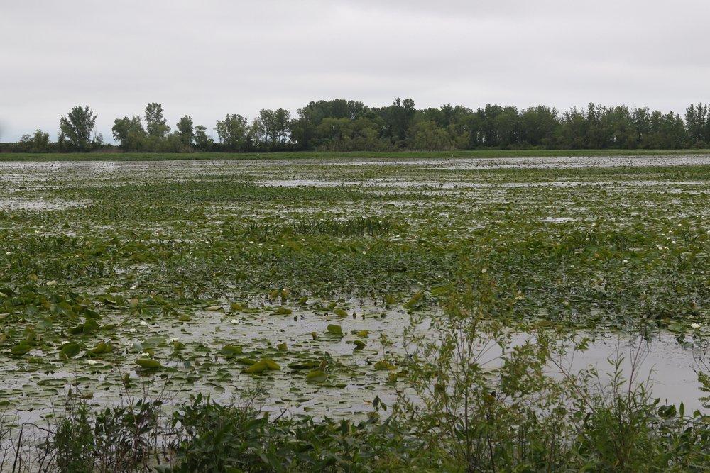 Zone humide à Metzger Marsh Wildlife Area, Ohio.